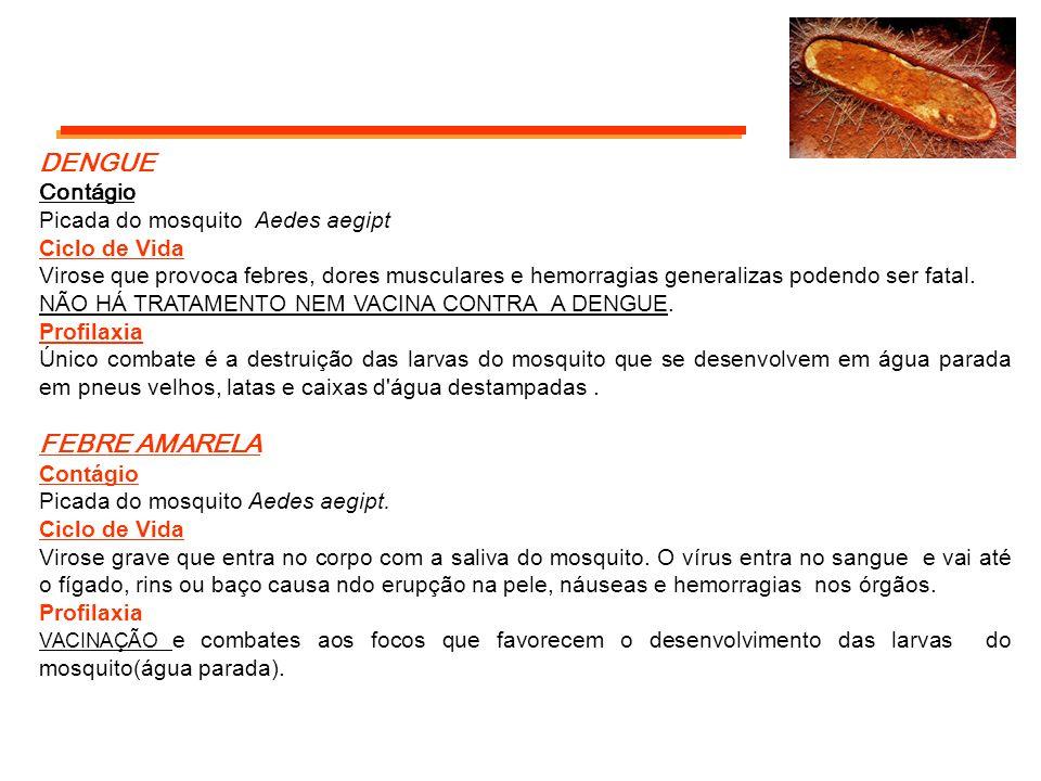 DENGUE FEBRE AMARELA Contágio Picada do mosquito Aedes aegipt