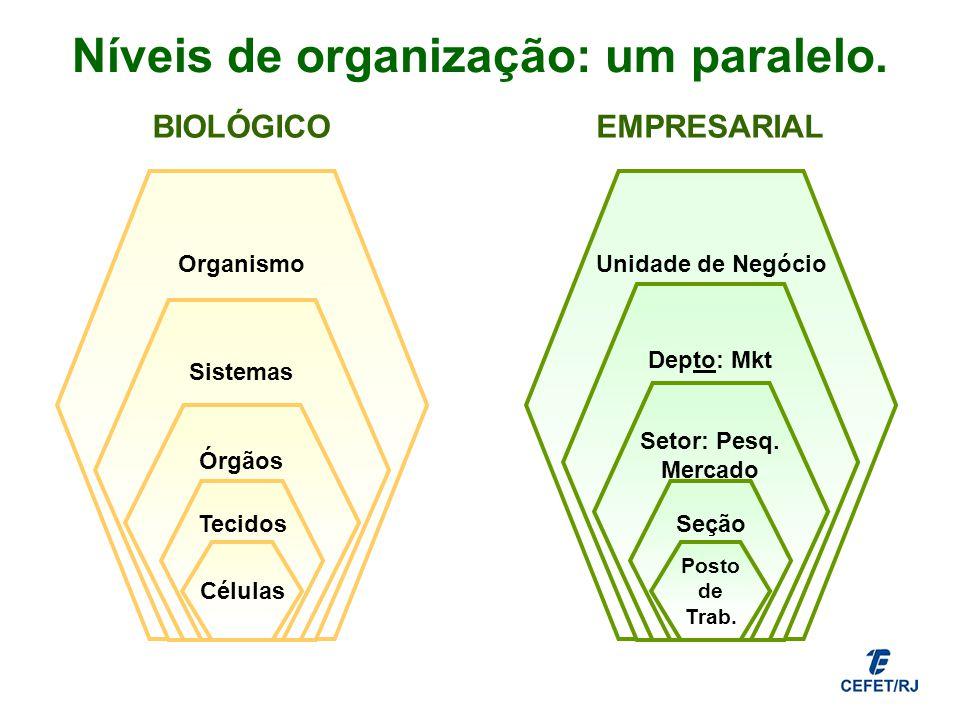 Níveis de organização: um paralelo.