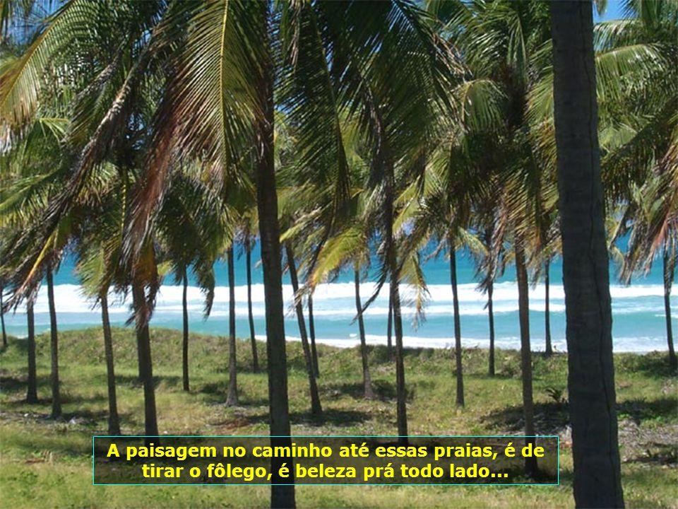 P0008260 - MARECHAL DEODORO - PRAIA COM COQUEIROS