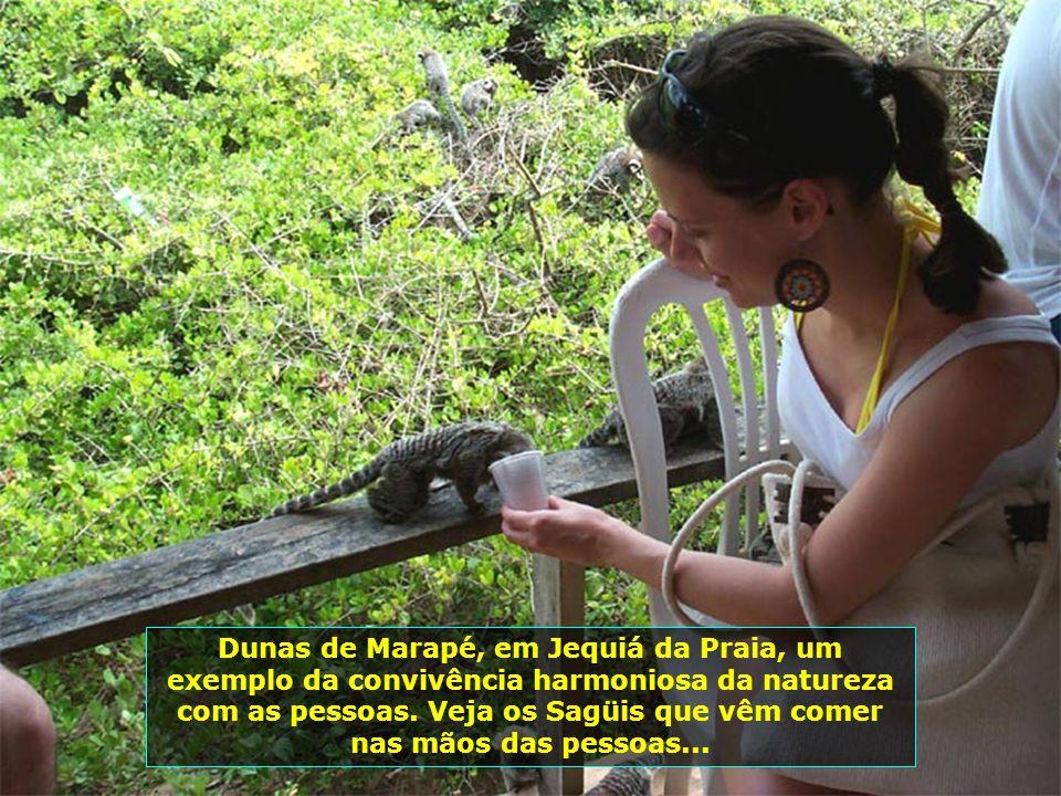 P0008207 - JEQUIÁ DA PRAIA - DUNAS DE MARAPÉ