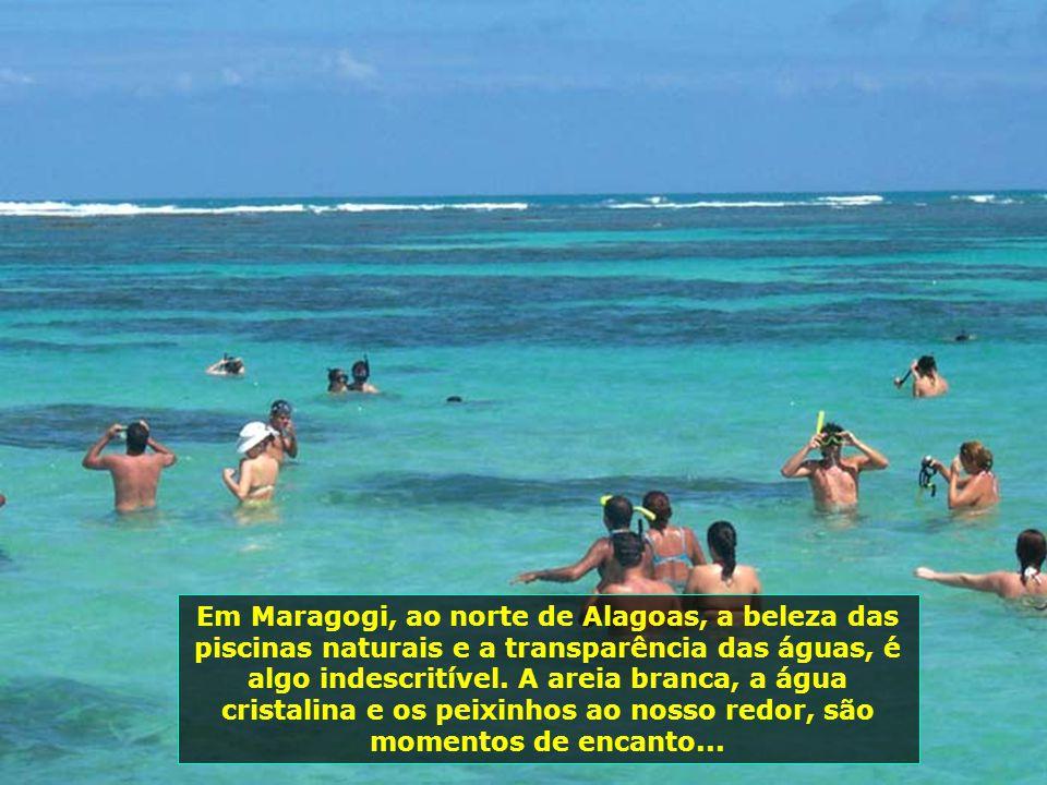 Em Maragogi, ao norte de Alagoas, a beleza das piscinas naturais e a transparência das águas, é algo indescritível.