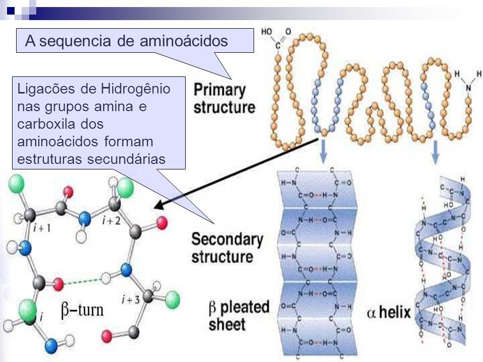A sequencia de aminoácidos