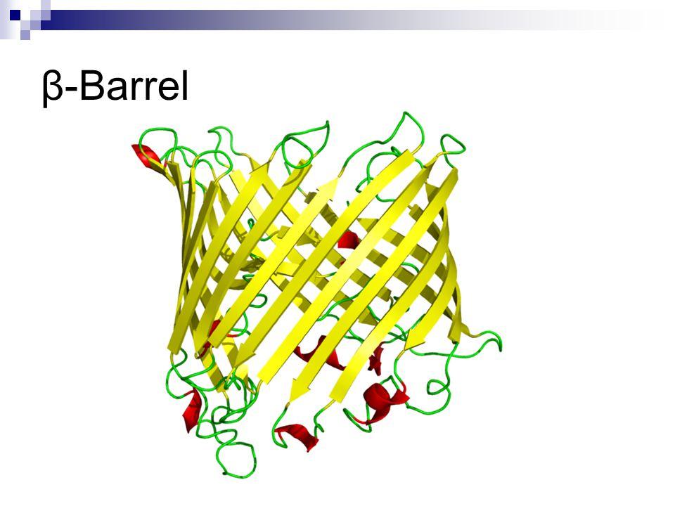 β-Barrel