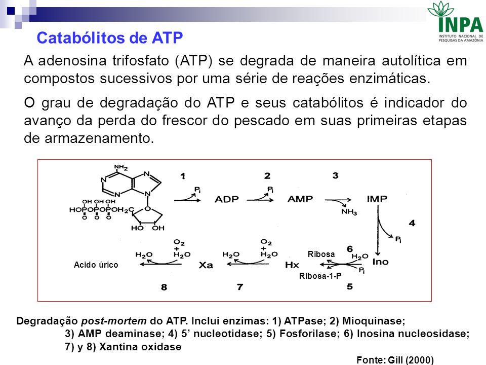 Catabólitos de ATP A adenosina trifosfato (ATP) se degrada de maneira autolítica em compostos sucessivos por uma série de reações enzimáticas.