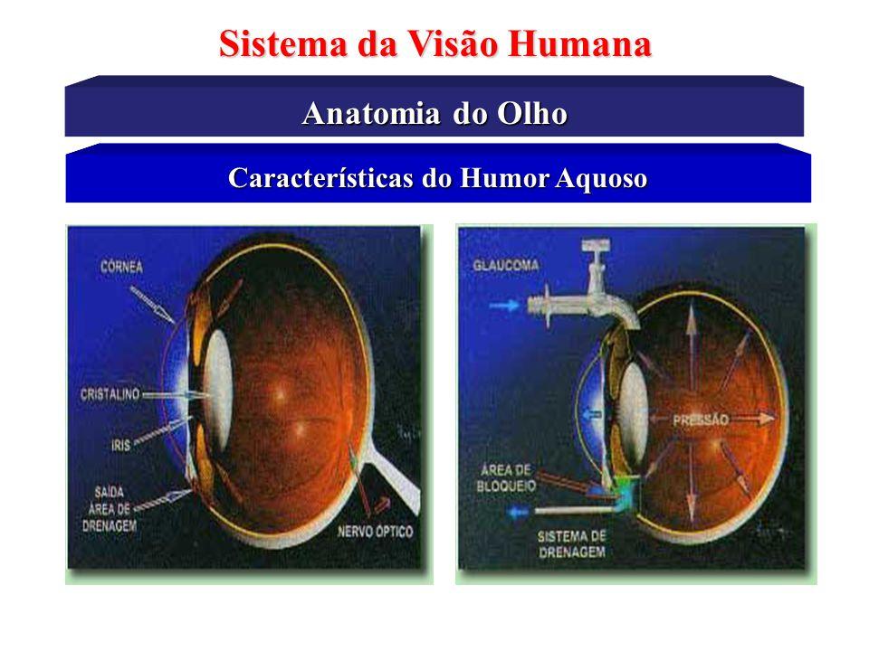 Sistema da Visão Humana Características do Humor Aquoso