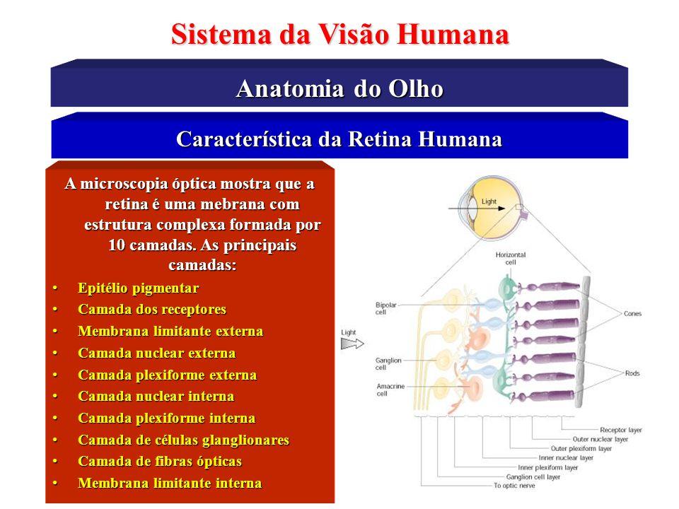 Sistema da Visão Humana Característica da Retina Humana