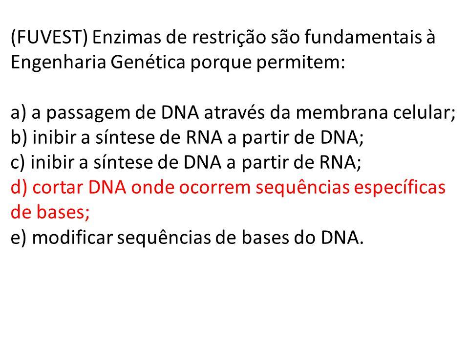 (FUVEST) Enzimas de restrição são fundamentais à Engenharia Genética porque permitem: a) a passagem de DNA através da membrana celular; b) inibir a síntese de RNA a partir de DNA; c) inibir a síntese de DNA a partir de RNA; d) cortar DNA onde ocorrem sequências específicas de bases; e) modificar sequências de bases do DNA.