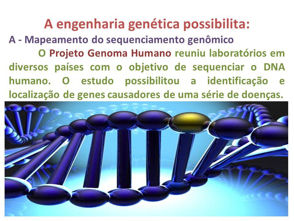 A engenharia genética possibilita: