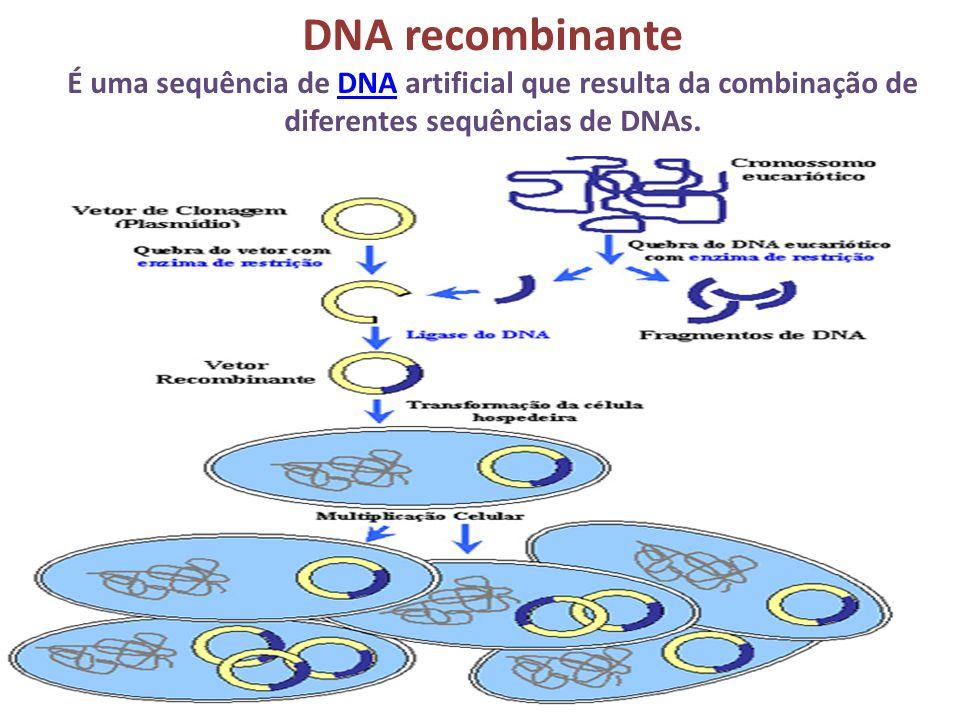 DNA recombinante É uma sequência de DNA artificial que resulta da combinação de diferentes sequências de DNAs.