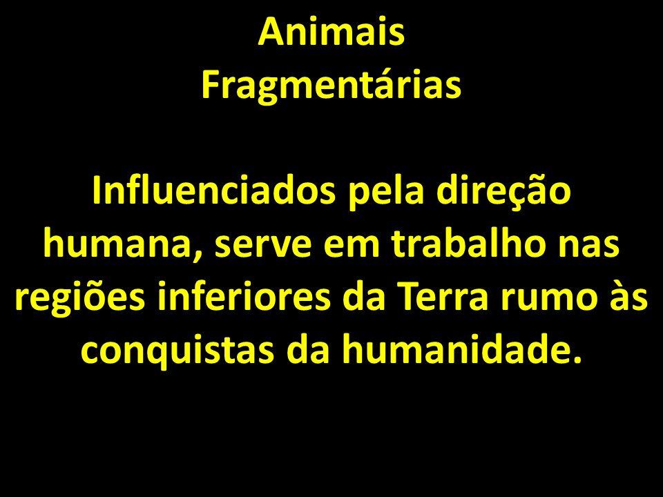 Animais Fragmentárias.