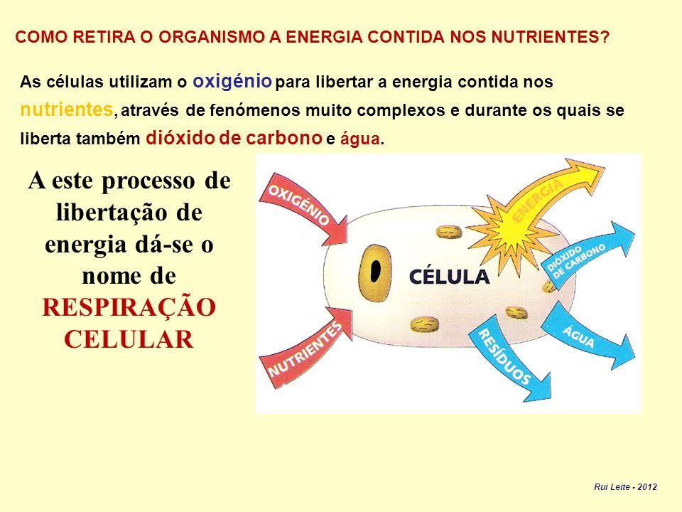 COMO RETIRA O ORGANISMO A ENERGIA CONTIDA NOS NUTRIENTES