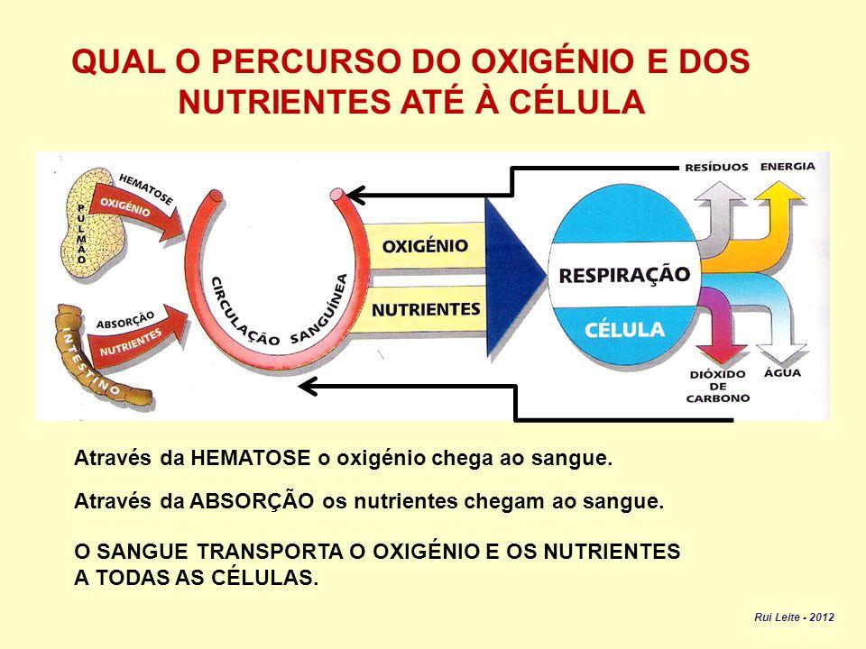 QUAL O PERCURSO DO OXIGÉNIO E DOS NUTRIENTES ATÉ À CÉLULA