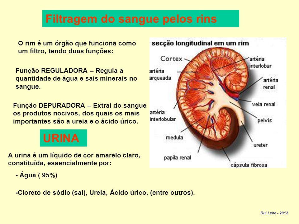 Filtragem do sangue pelos rins