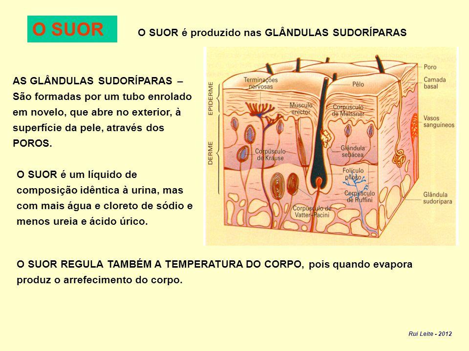 O SUOR O SUOR é produzido nas GLÂNDULAS SUDORÍPARAS