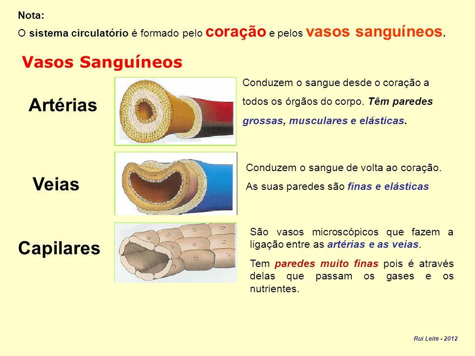 Artérias Veias Capilares Vasos Sanguíneos Nota: