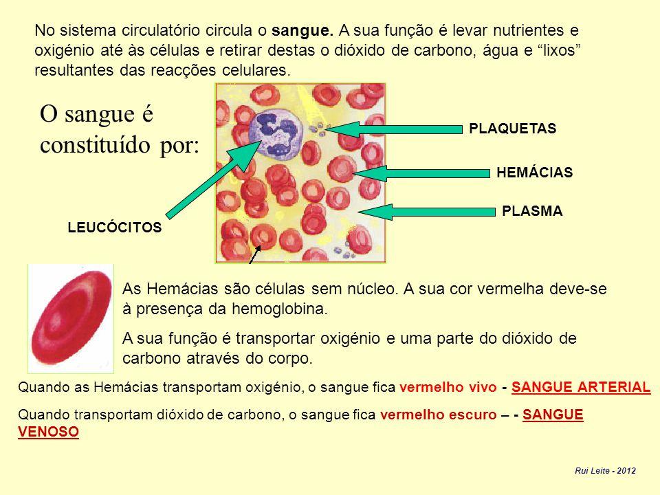 O sangue é constituído por: