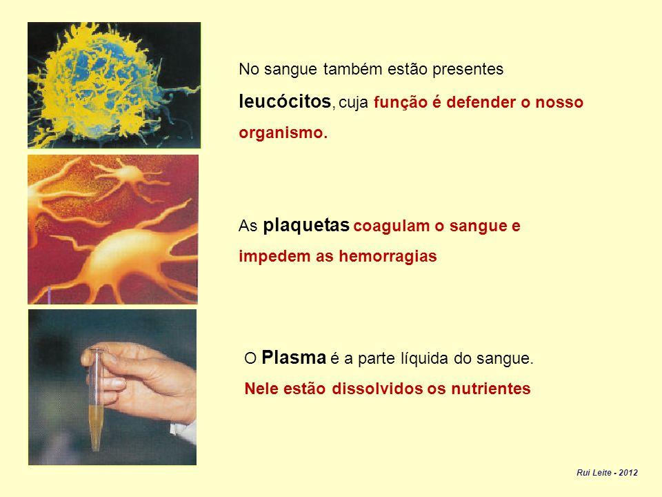 leucócitos, cuja função é defender o nosso