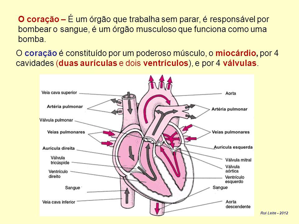 O coração – É um órgão que trabalha sem parar, é responsável por bombear o sangue, é um órgão musculoso que funciona como uma bomba.