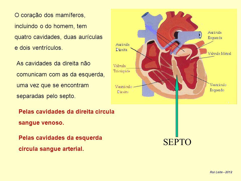 SEPTO O coração dos mamíferos, incluindo o do homem, tem