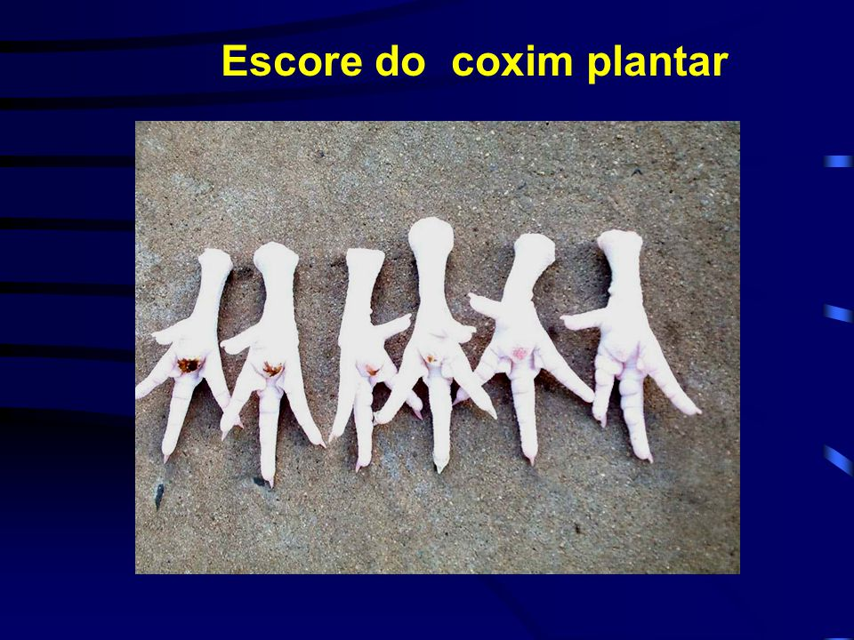 Escore do coxim plantar