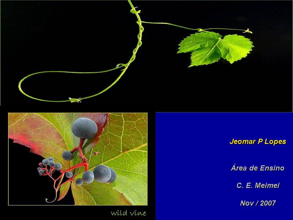 Jeomar P Lopes Área de Ensino C. E. Meimei Nov / 2007