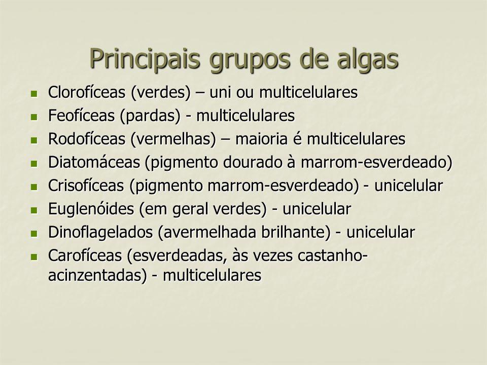 Principais grupos de algas