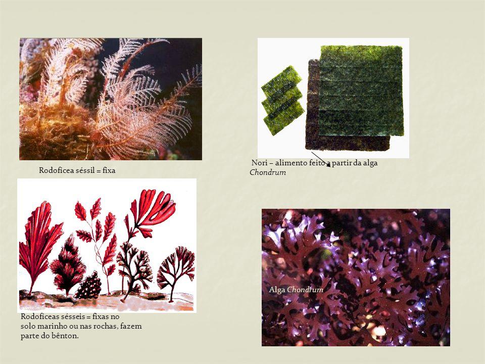 Nori – alimento feito a partir da alga