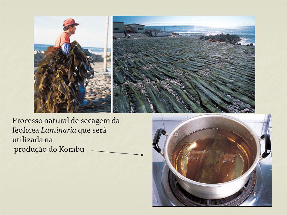 Processo natural de secagem da feofícea Laminaria que será utilizada na