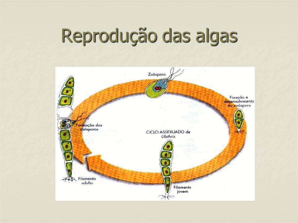 Reprodução das algas