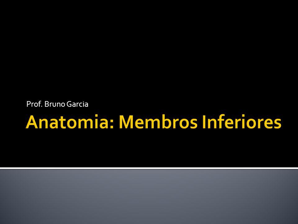 Anatomia: Membros Inferiores