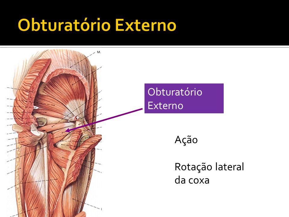 Obturatório Externo Obturatório Externo Ação Rotação lateral da coxa