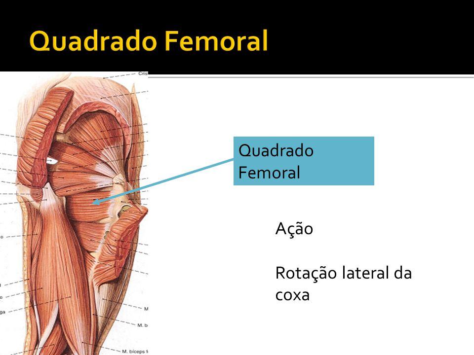 Quadrado Femoral Quadrado Femoral Ação Rotação lateral da coxa