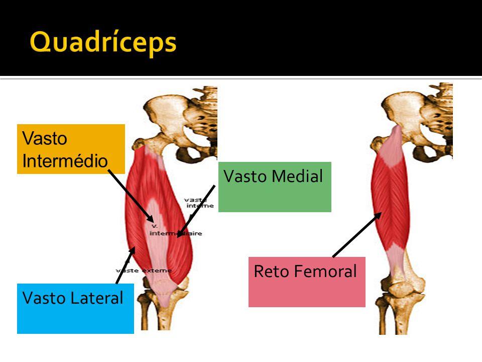 Quadríceps Vasto Intermédio Vasto Medial Reto Femoral Vasto Lateral
