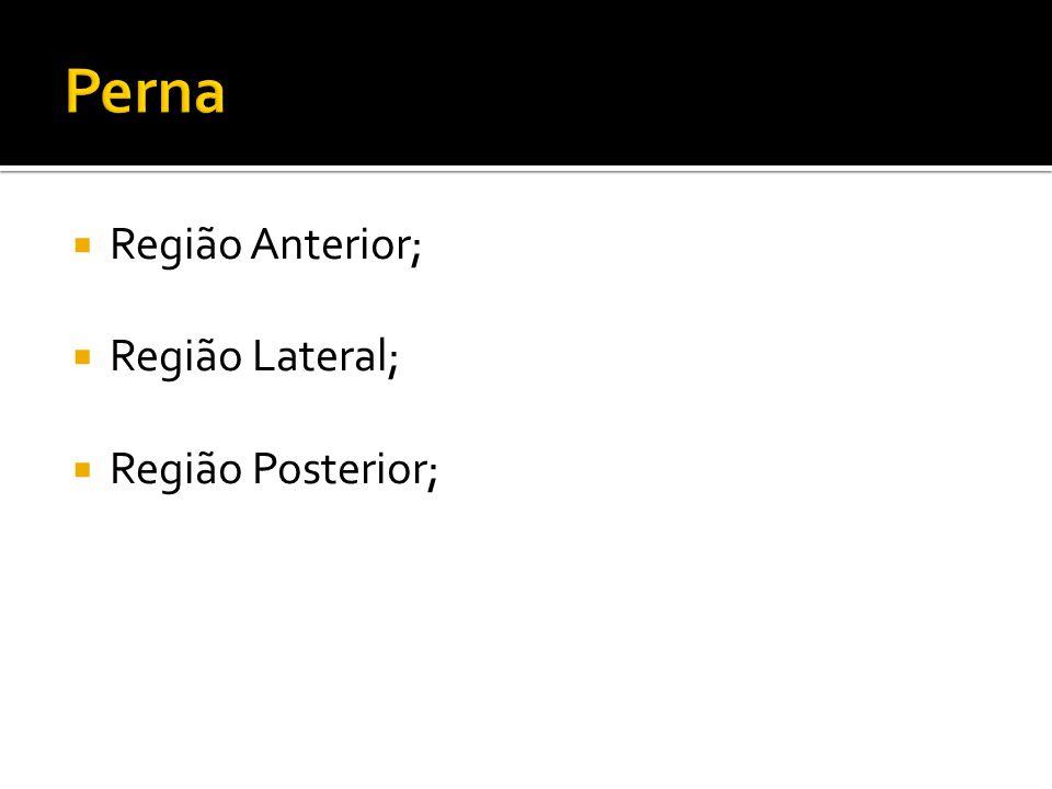 Perna Região Anterior; Região Lateral; Região Posterior;