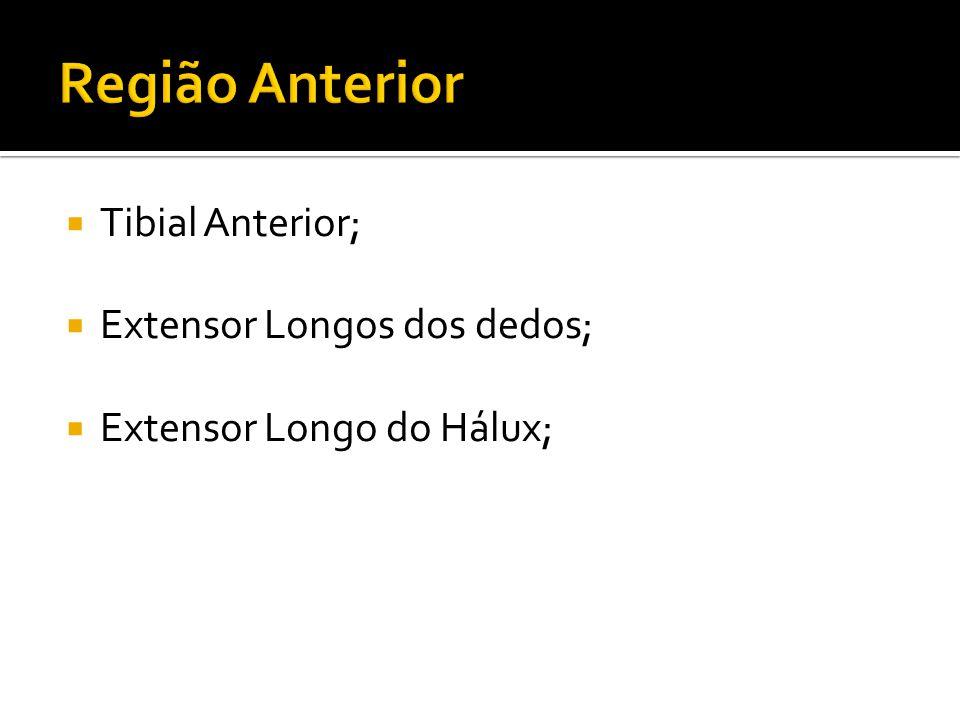 Região Anterior Tibial Anterior; Extensor Longos dos dedos;