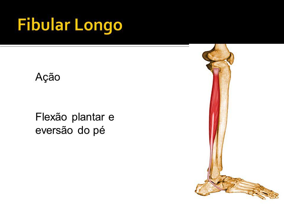 Fibular Longo Ação Flexão plantar e eversão do pé
