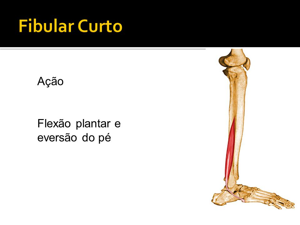 Fibular Curto Ação Flexão plantar e eversão do pé