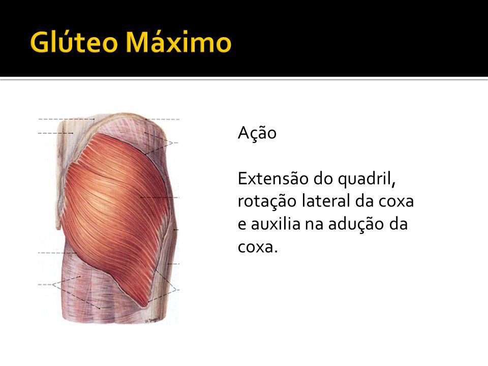 Glúteo Máximo Ação Extensão do quadril, rotação lateral da coxa e auxilia na adução da coxa.