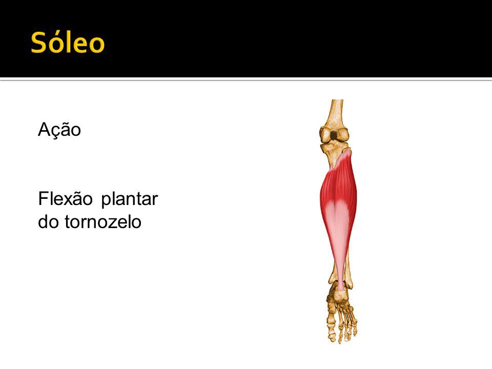 Sóleo Ação Flexão plantar do tornozelo