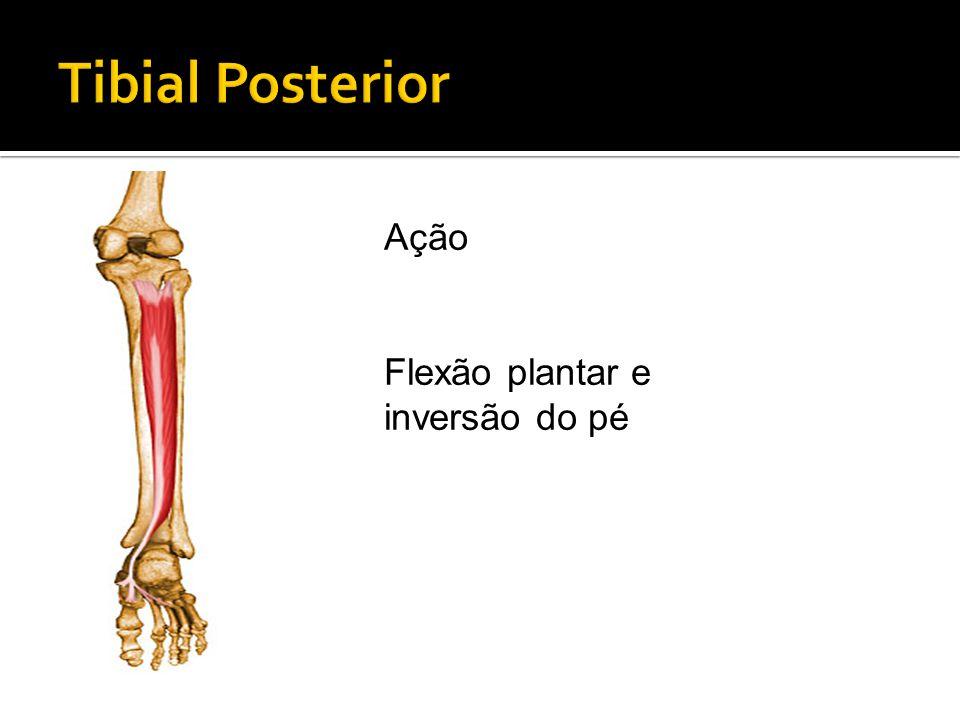Tibial Posterior Ação Flexão plantar e inversão do pé