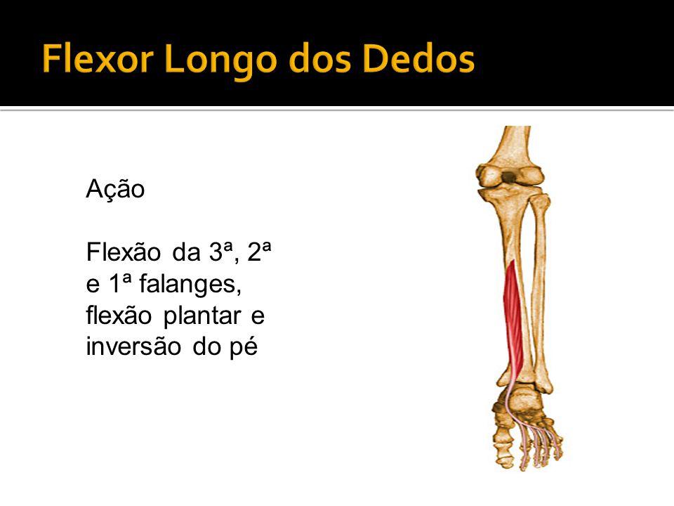 Flexor Longo dos Dedos Ação