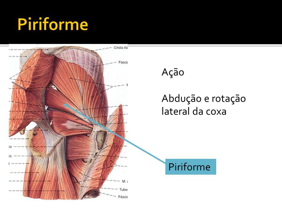 Piriforme Ação Abdução e rotação lateral da coxa Piriforme
