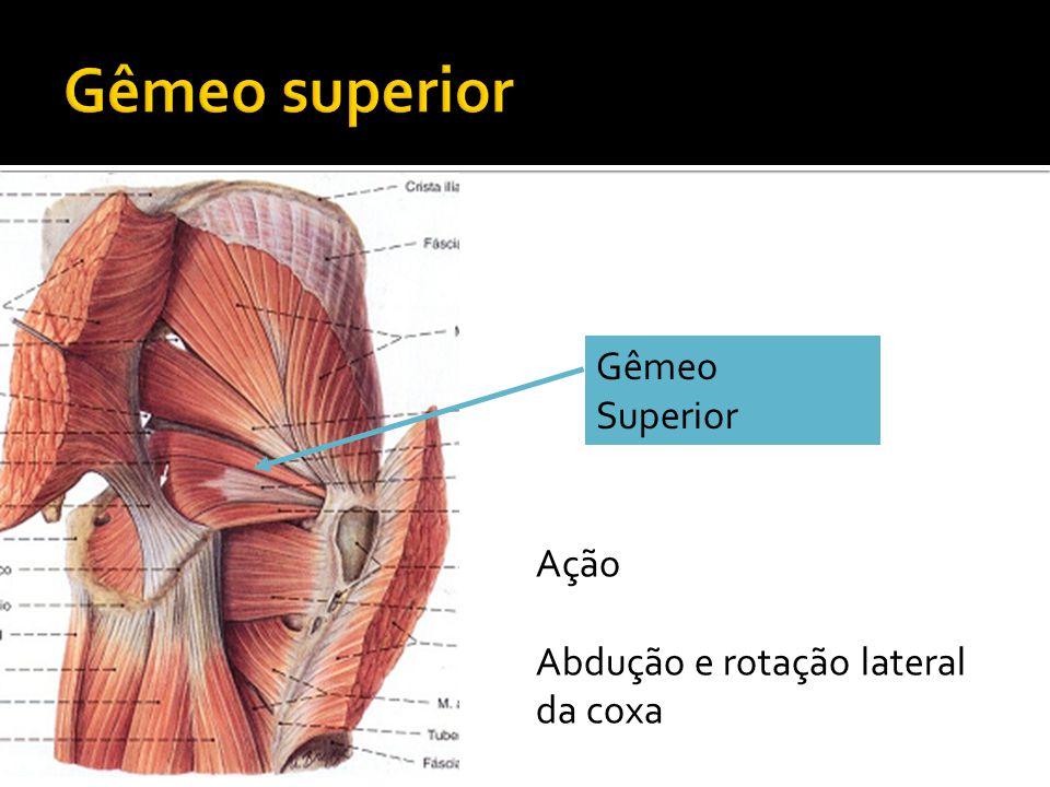 Gêmeo superior Gêmeo Superior Ação Abdução e rotação lateral da coxa