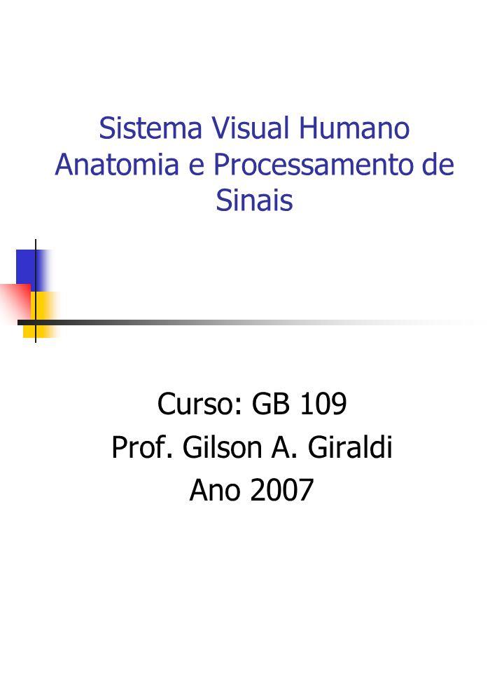 Sistema Visual Humano Anatomia e Processamento de Sinais