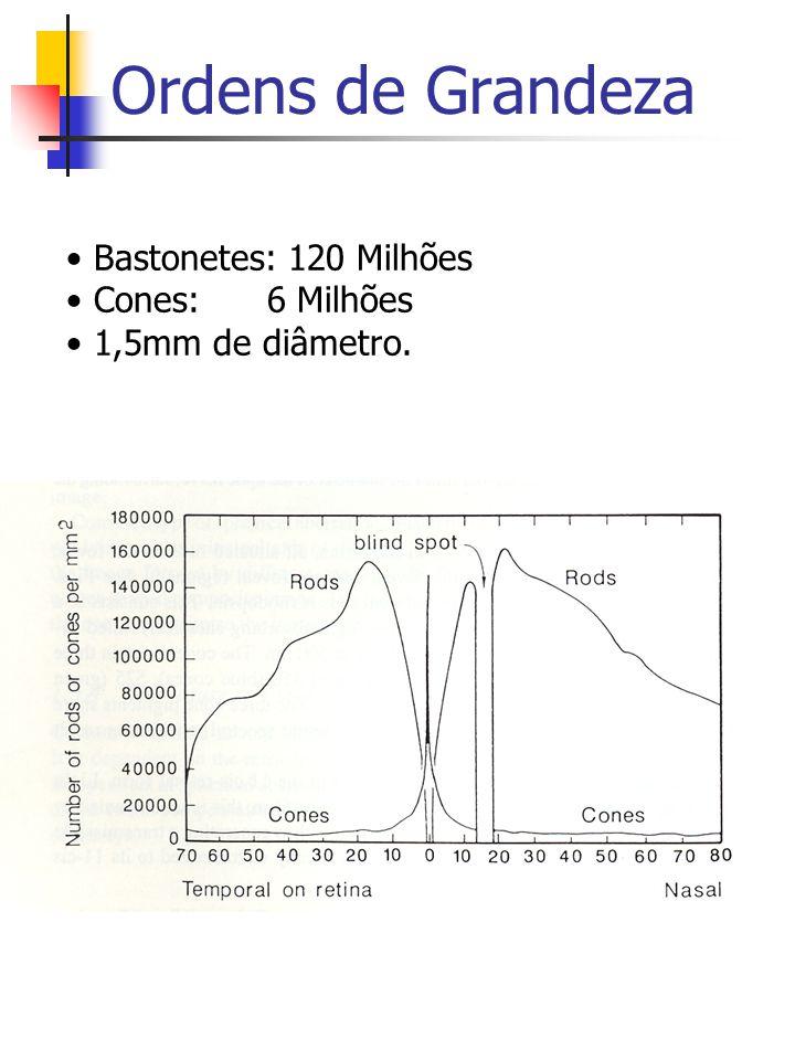 Ordens de Grandeza Bastonetes: 120 Milhões Cones: 6 Milhões