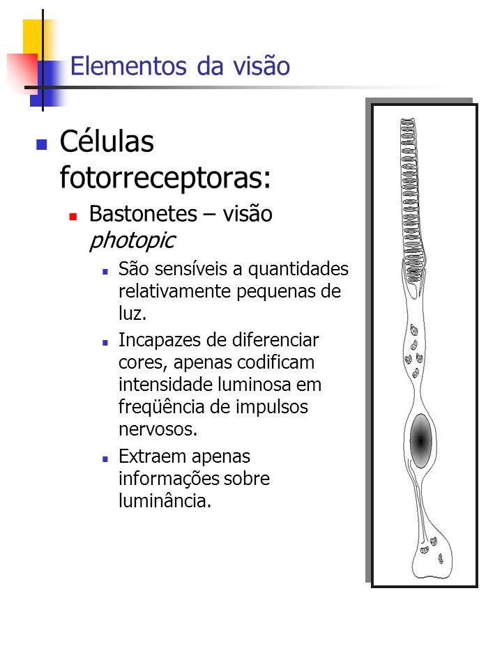 Células fotorreceptoras: