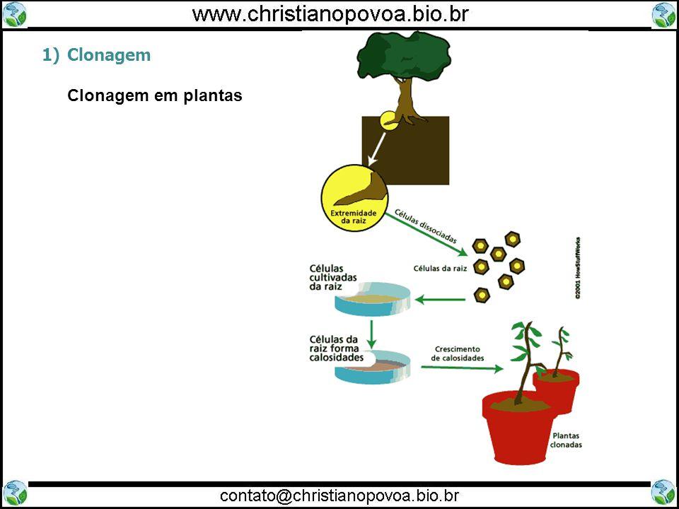 Clonagem Clonagem em plantas 15