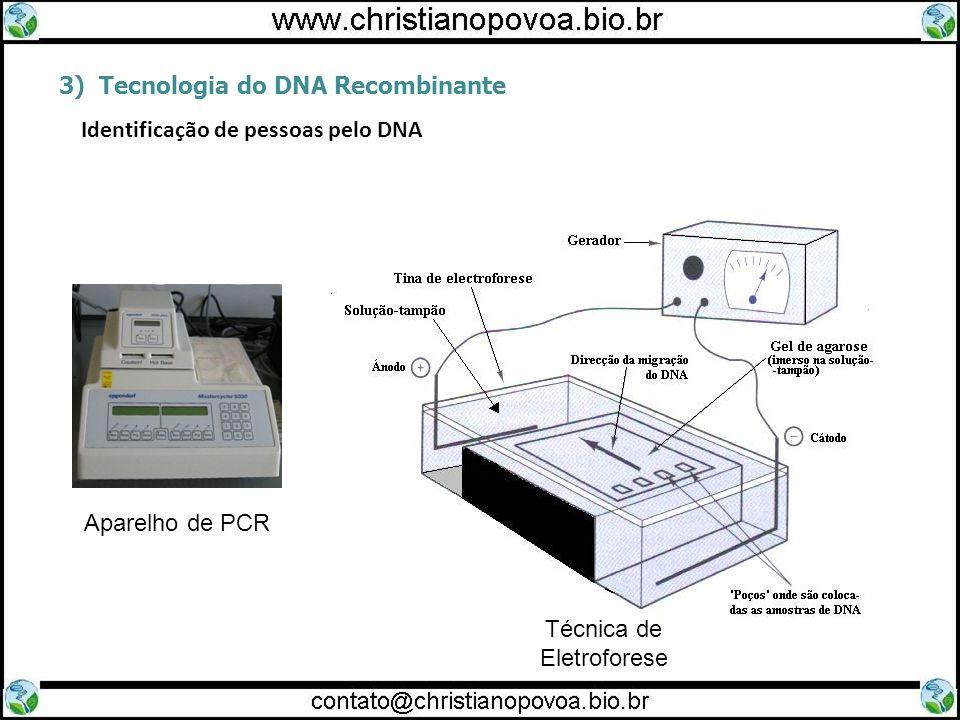 Técnica de Eletroforese