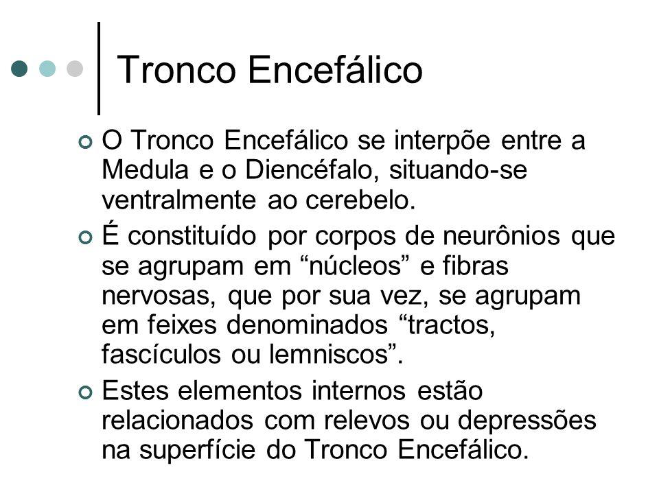 Tronco Encefálico O Tronco Encefálico se interpõe entre a Medula e o Diencéfalo, situando-se ventralmente ao cerebelo.