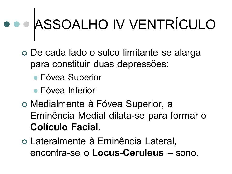 ASSOALHO IV VENTRÍCULO